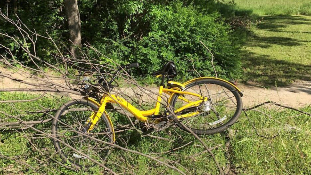 Bike Share Operators Will Now Be Fined $3000 For Bikes Dumped In Rivers, Trees And Other Fun Places