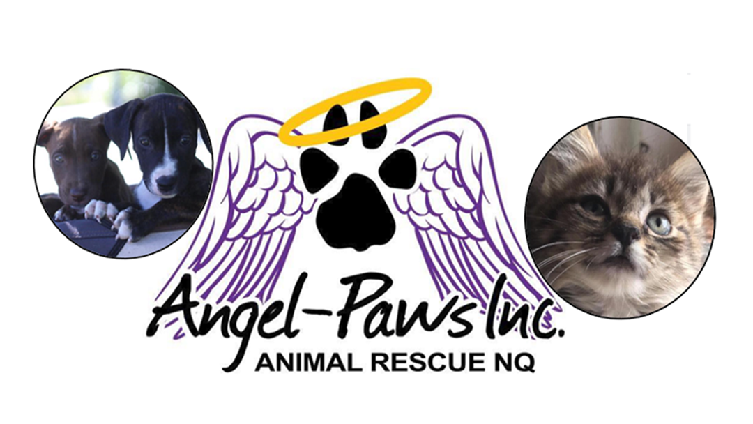 Angel Paws Hit With Triple The Demand, You Can Help Though
