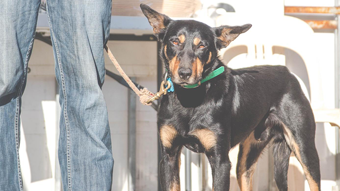 This Victorian Farm Dog Is So Legendary It Sold For Over $22,000