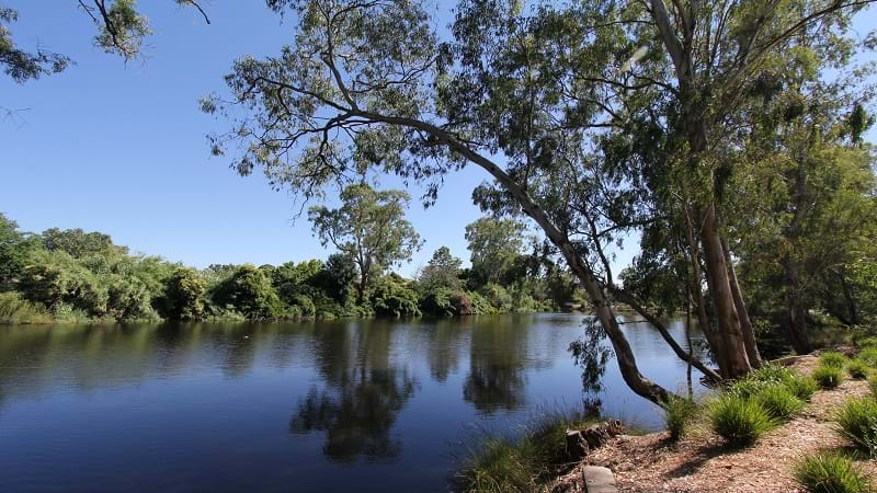 Article heading image for Murray-Darling Compliance Under the Microscope