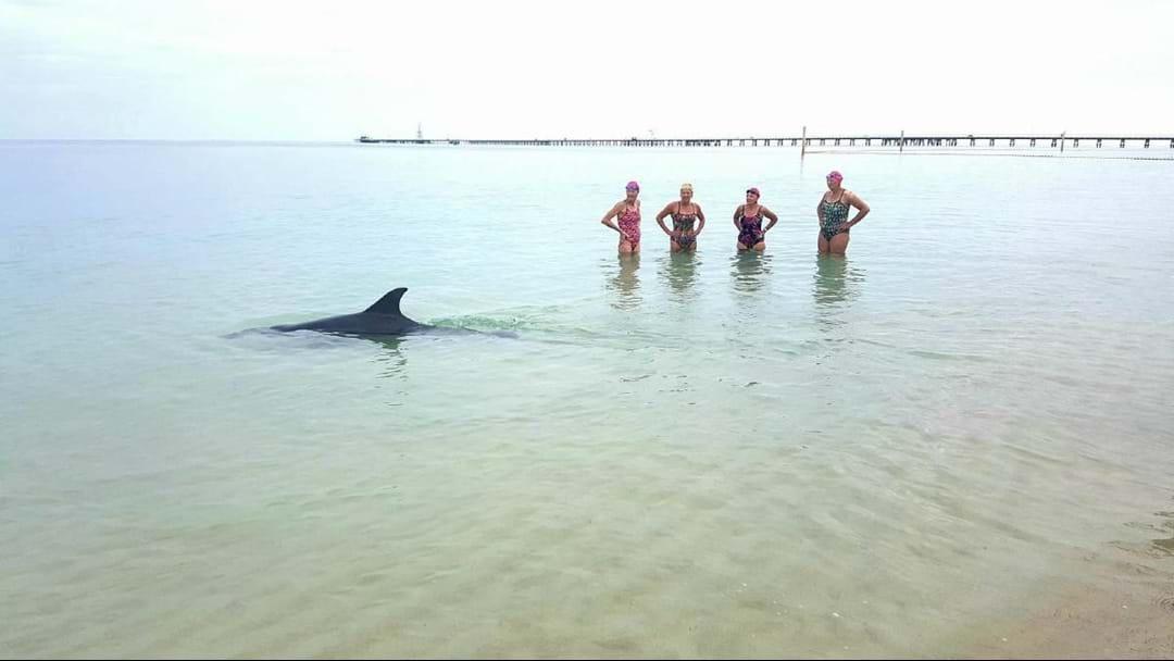 Surprise Busselton Jetty Swim Contender