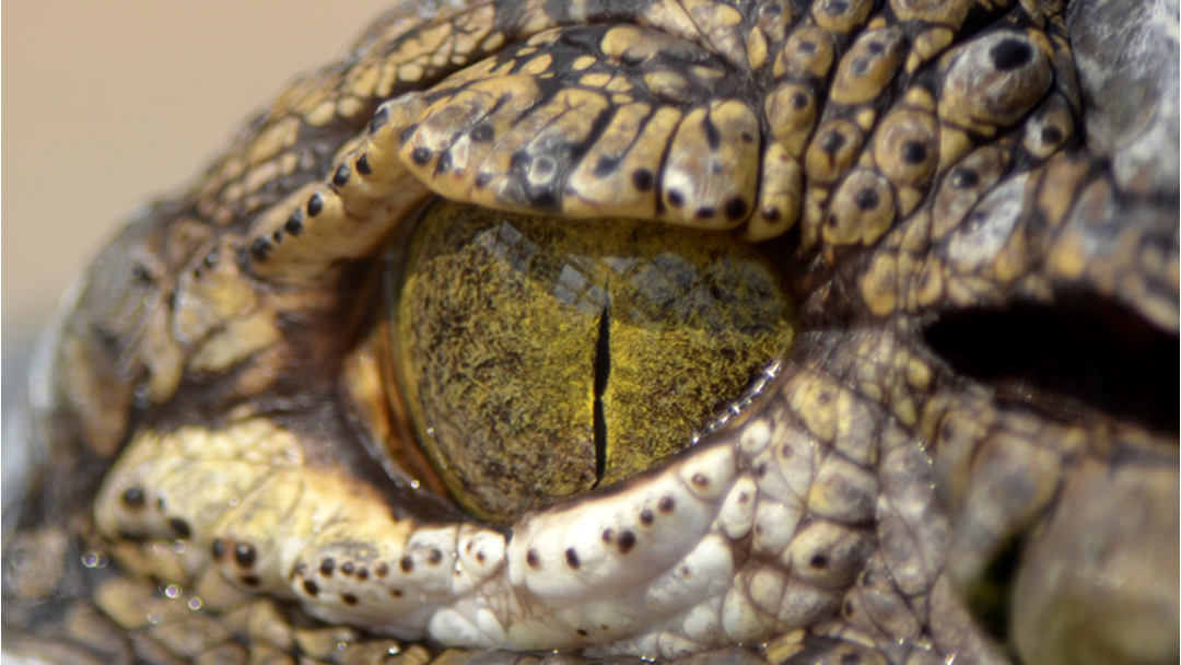 The Australian Reptile Park Is Turning 60!!!