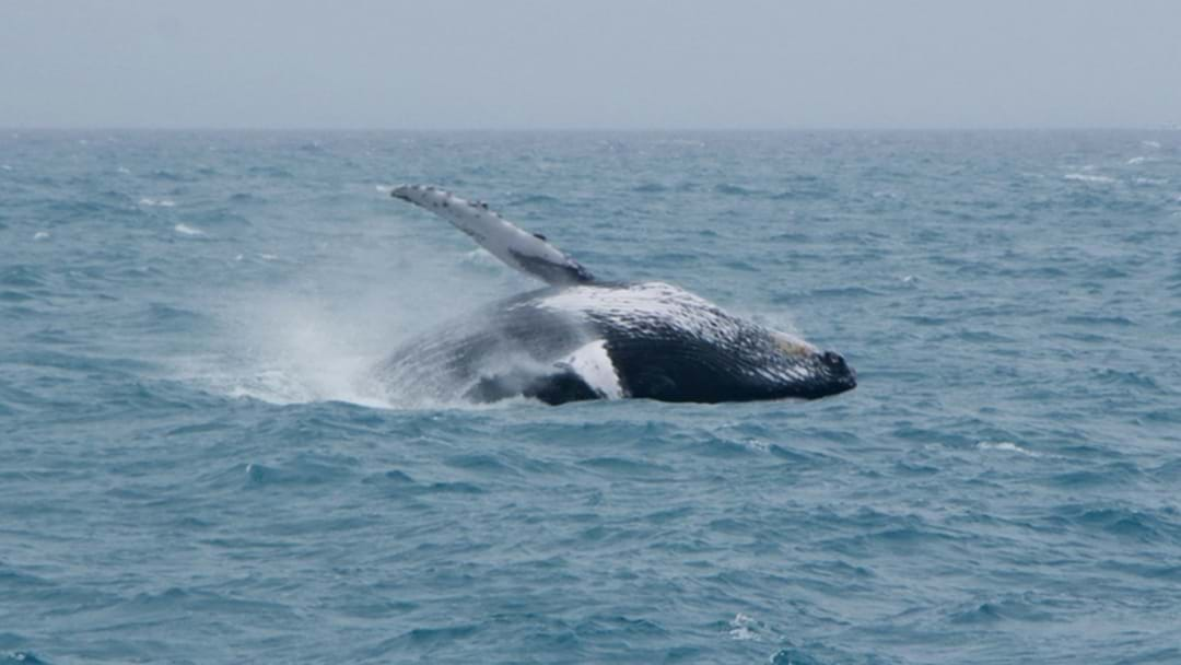 Poseidon Passengers Surprised By Humpback Whale