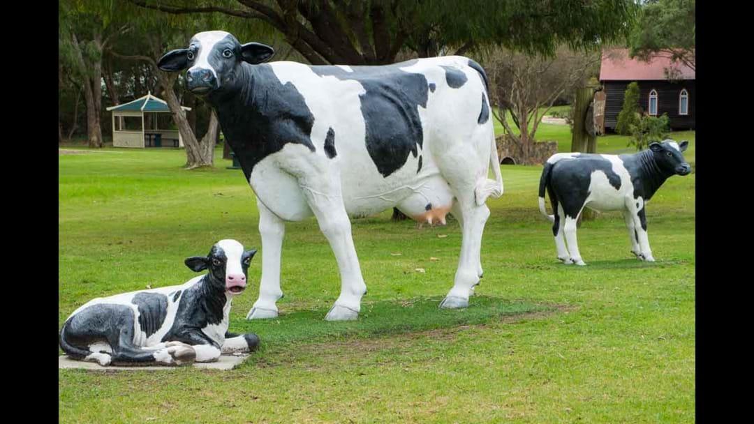 Iconic Cow Imitation