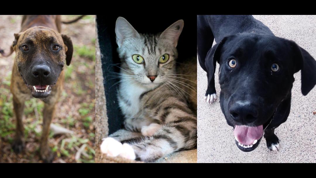 RSPCA Pets Of The Week