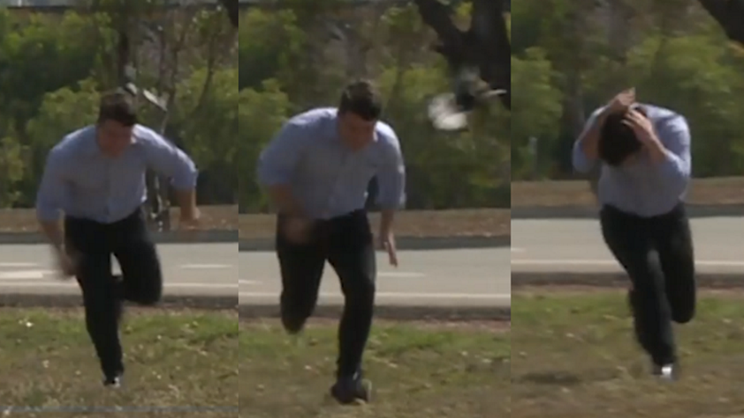 Footage Of Townsville News Reporter Magpie Attack Has To Be Seen To Be Believed