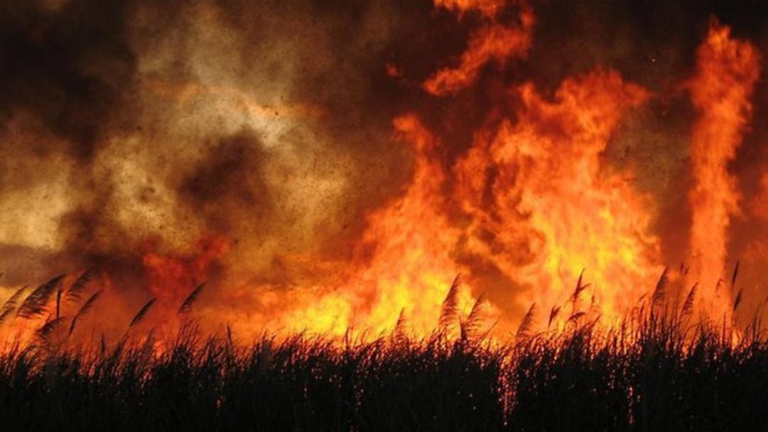 Essential Ways To Prepare For Bushfire Season