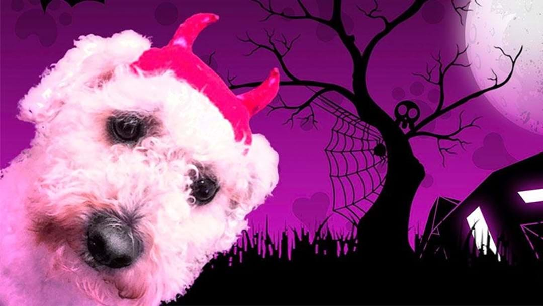 There's A Free Halloween Party For Your Dog In Perth