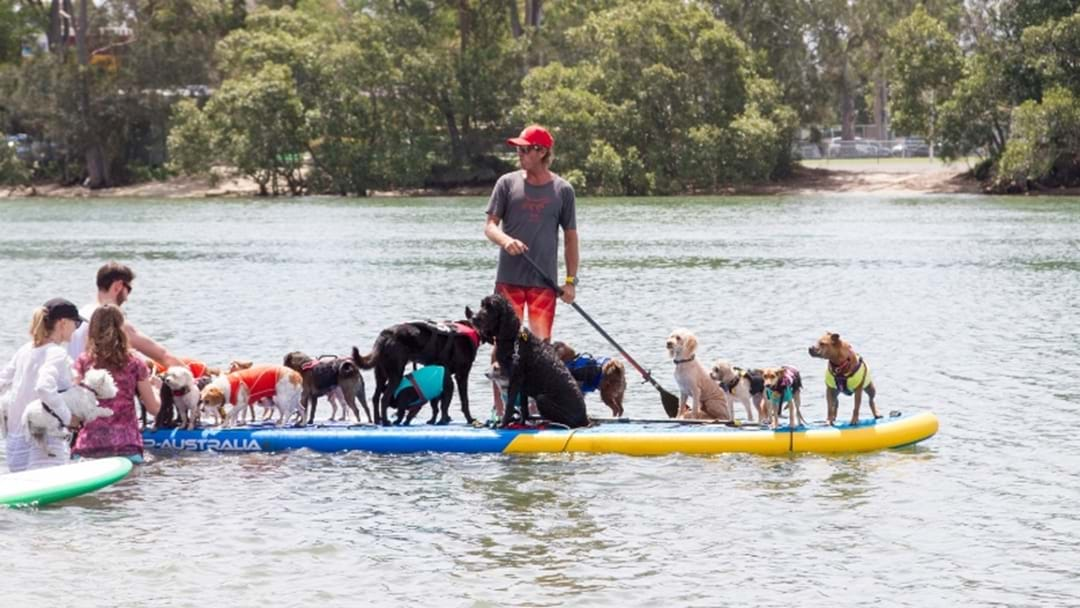 Pups On SUPS Returns To The Gold Coast This Month!