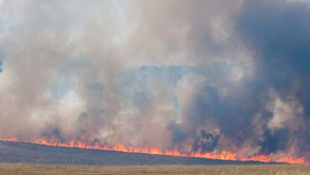 Bird Starts Large Destructive NSW Fire