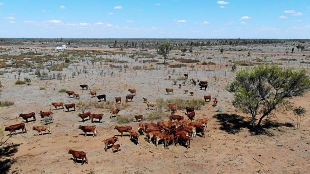 Farmers For Climate Action Release 3-Week Campaign Featuring Local Cattle Producer