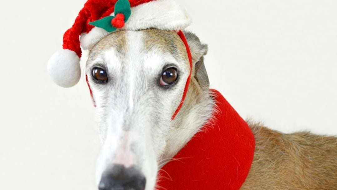 Your Fur Baby Deserves the Annual Santa Pic Too!