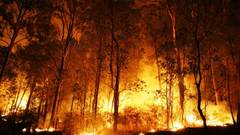 Article heading image for How To Prevent Bushfire Related Health Issues
