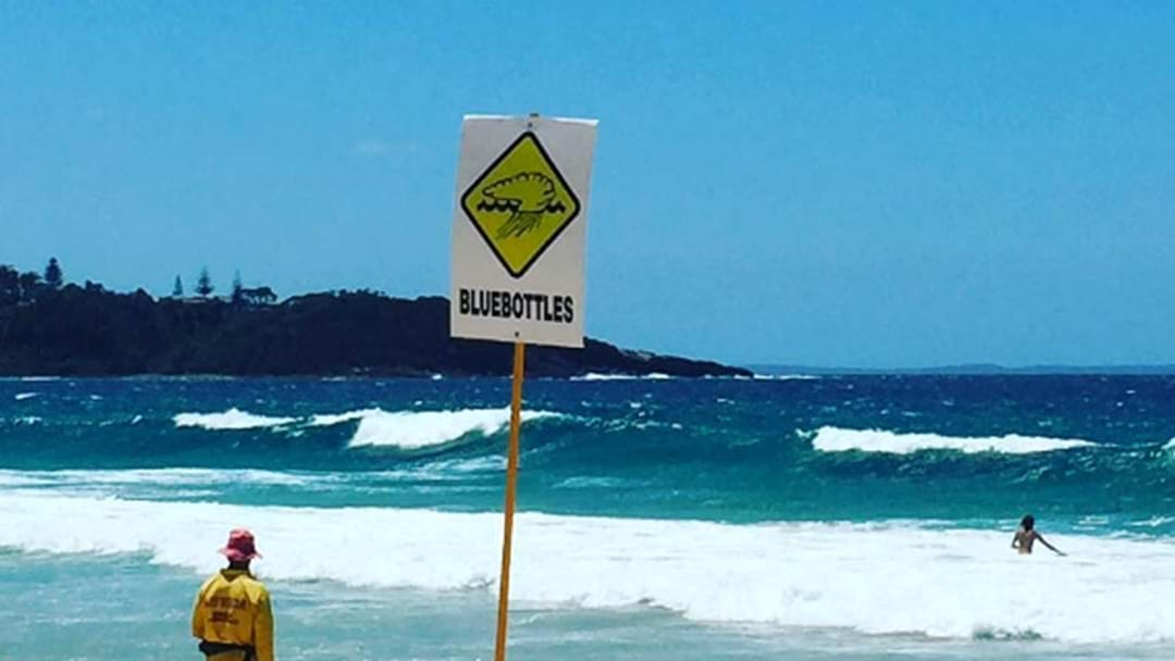 Sydney's Bluebottle Invasion