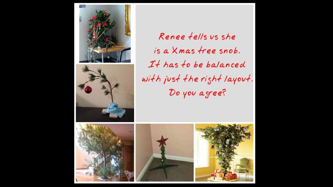 Are You a Christmas Tree Snob?