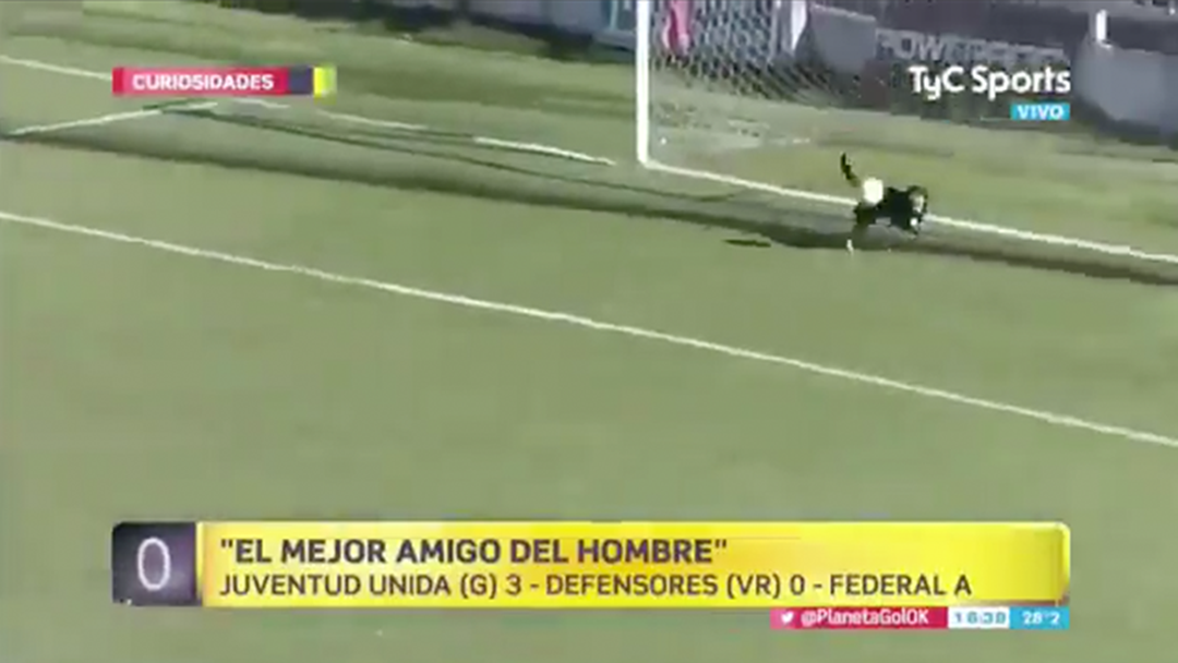 Watch: Stray Dog Runs Onto Soccer Field And Saves Shot On Goal