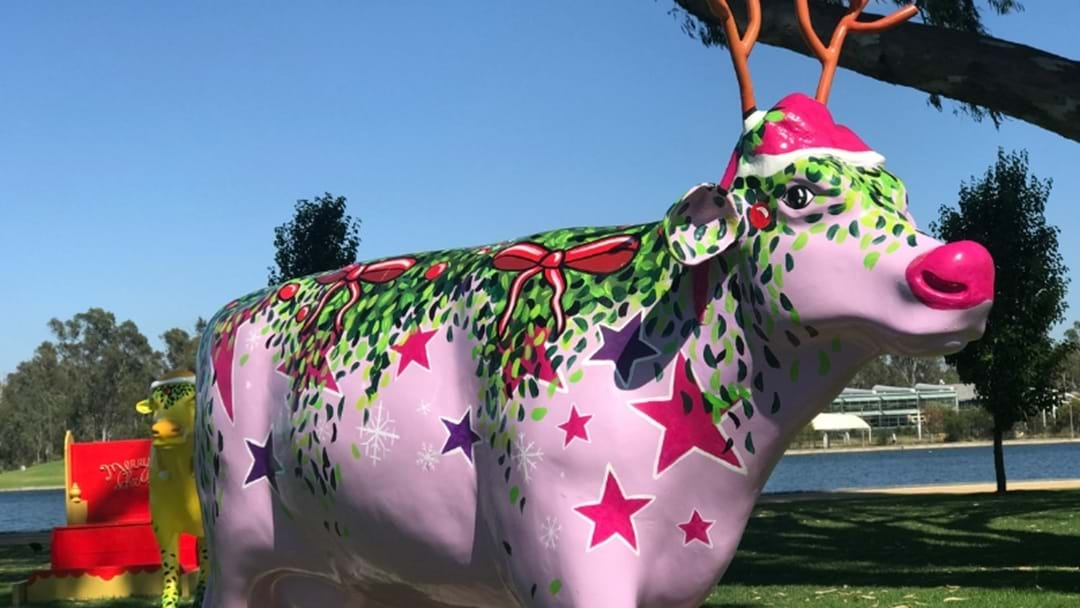 What Were Your Thoughts On The Greater Shepparton Festive Decorations?