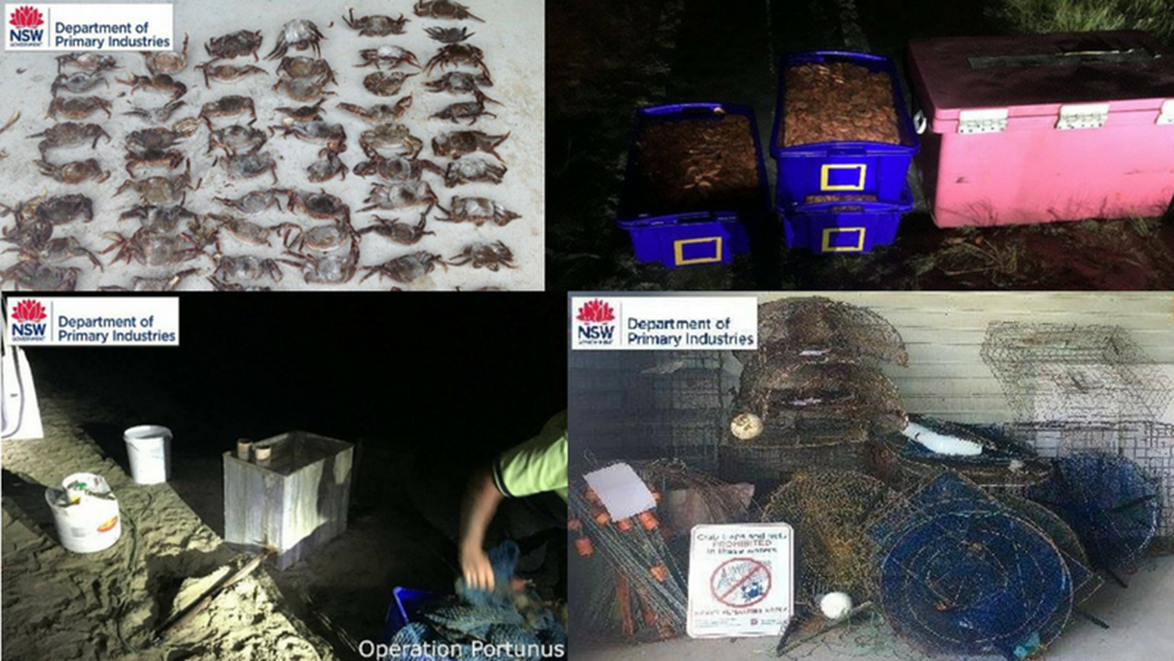 DPI Operation Seizes Illegal Prawns, Crabs and Fishing Gear