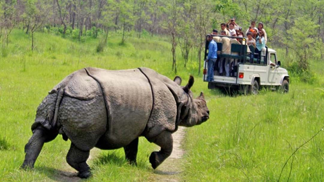Australian Teenager In Critical Condition After Rhino Attack In Nepal