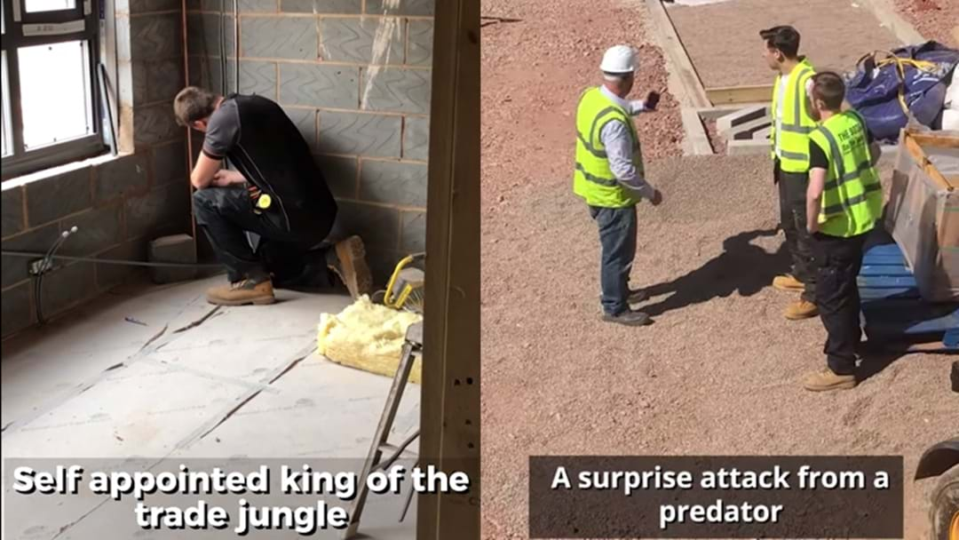 This Bloke Has Been Narrating His Tradie Mates Like An Attenborough Doco And It's Truly Majestic