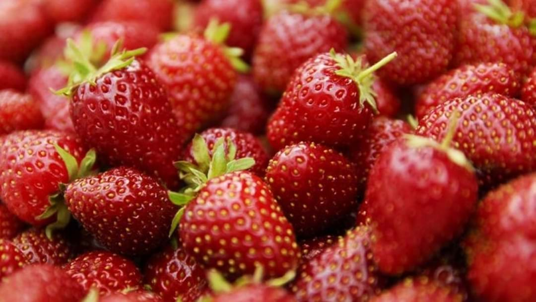 Ballantyne Strawberry Farm Temporarily Closed After Bad Weather