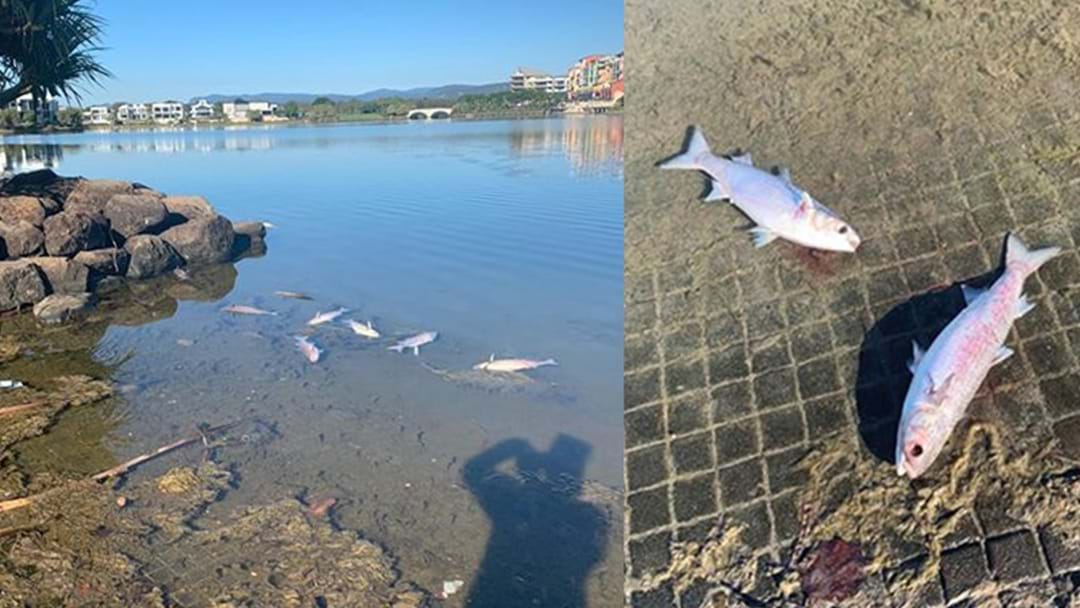 The Cause Of Death For Hundreds Of Fish In Emerald Lakes