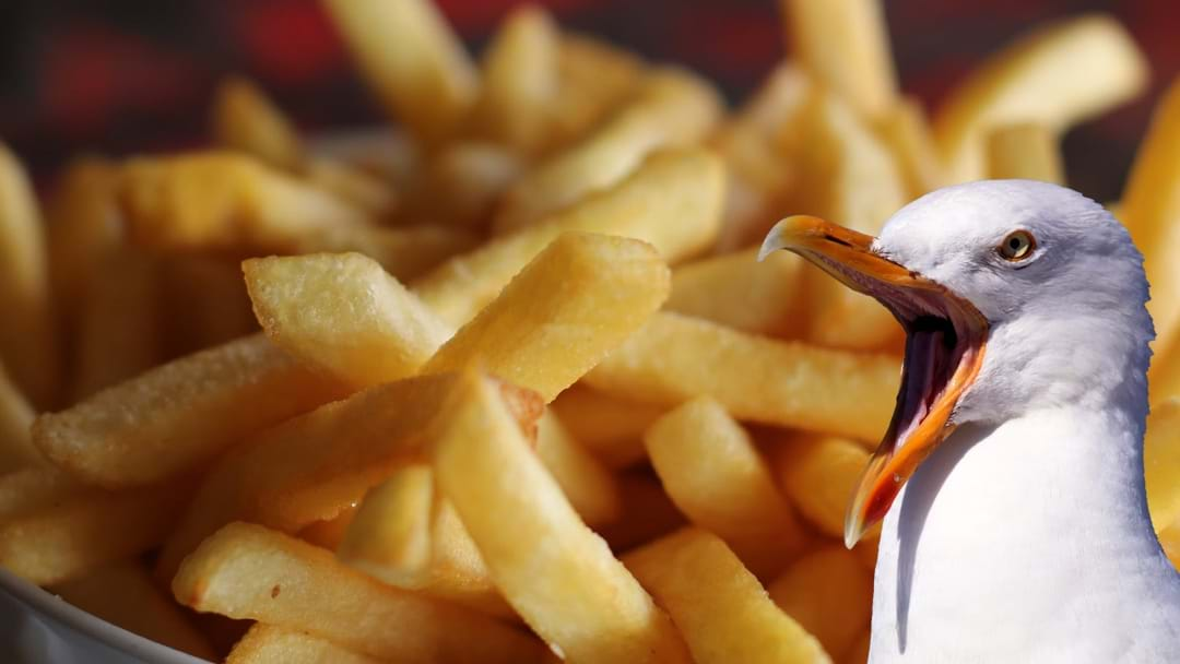 There's An EASY Way To Keep Seagulls Away From Your Chips!
