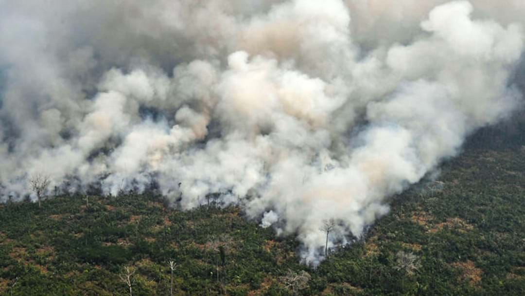 Mandy & Rob Talk To An Arson & Bushfire Expert About The Catastrophic Amazon Fires!