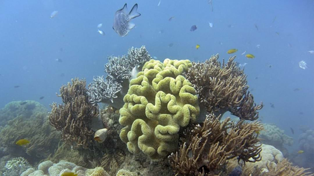 The Great Barrier Reef Could Be Dead Within 20 Years