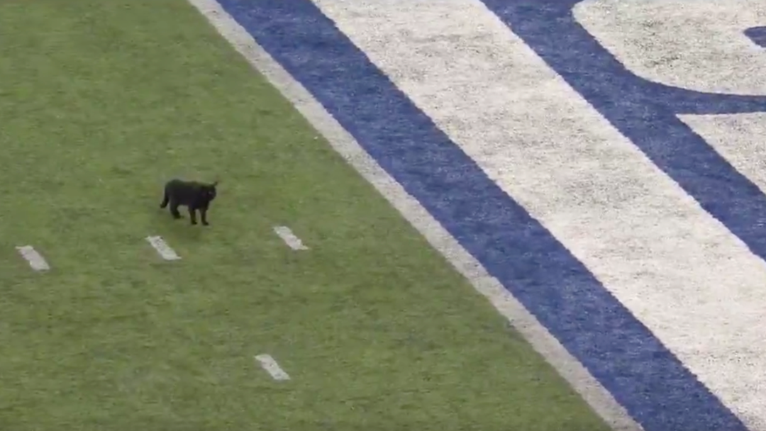 This Commentator's Call Of A Cat Running Down A Footy Field Is A Bloody Crack-Up