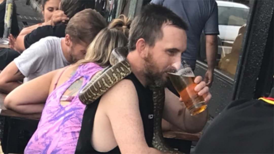 Bloke On Brunswick St Takes His Python For Froth
