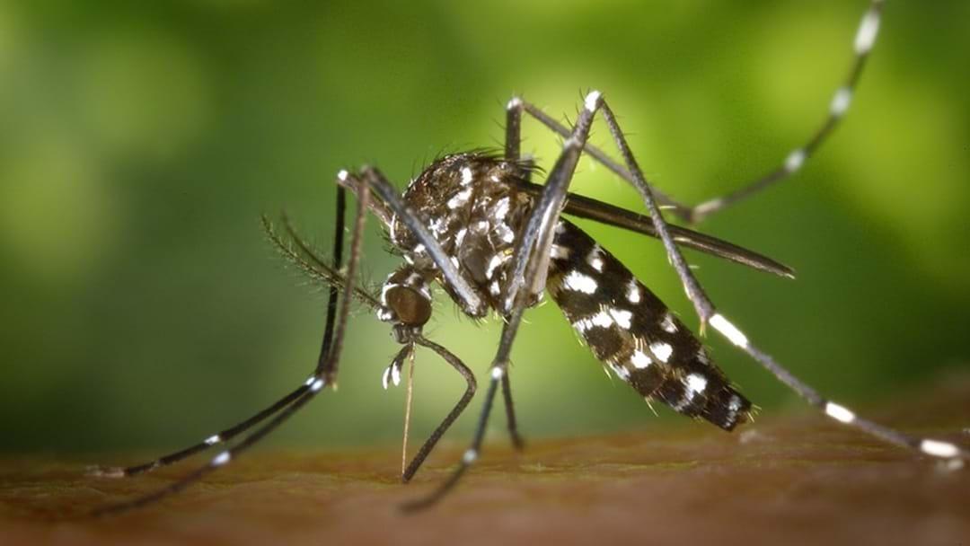 Kunjin Virus Detected In Shepparton